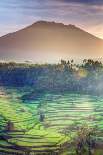 Mt Agung「Indonesia, Bali, Rice Fields and Volcanoes」:スマホ壁紙(11)