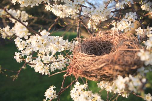 梅の花「Bird nest in plum tree」:スマホ壁紙(6)