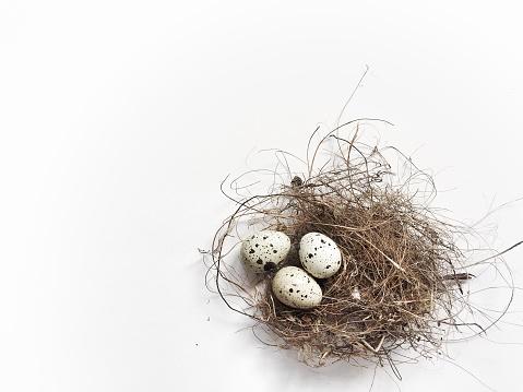 Easter「Three quail eggs in a birds nest」:スマホ壁紙(10)