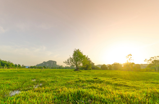Land「Golden meadow in summer」:スマホ壁紙(9)
