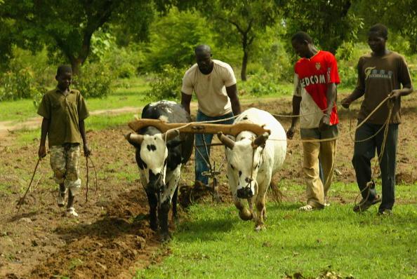 Ox Cart「Hollywood Star Djimon Hounsou Visits Mali」:写真・画像(12)[壁紙.com]