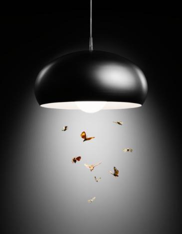 Conformity「Moths flying in lamp light」:スマホ壁紙(8)