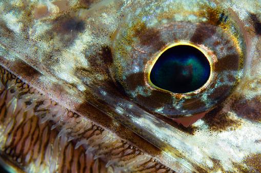 Iris - Eye「Extreme close-up of a lizardfish eyeball, Australia.」:スマホ壁紙(3)