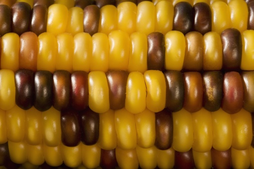 Indian Corn「Extreme closeup of Indian corn」:スマホ壁紙(16)
