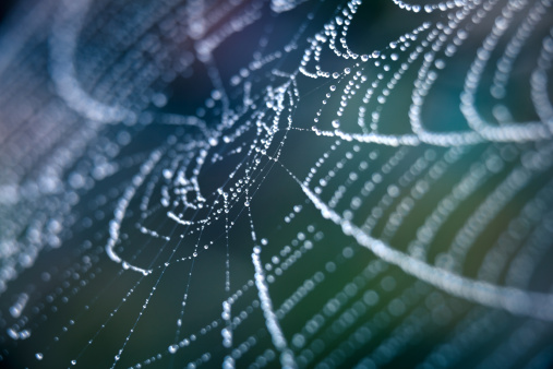 Spider Web「Extreme Closeup Spiderweb With Dew」:スマホ壁紙(1)