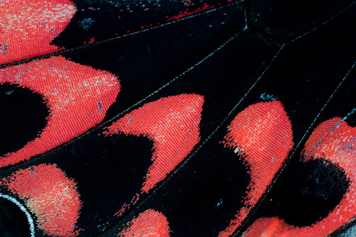 Animal Wing「Extreme close-up of butterfly wing pattern」:スマホ壁紙(11)