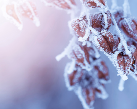 January「Frozen nature.」:スマホ壁紙(9)