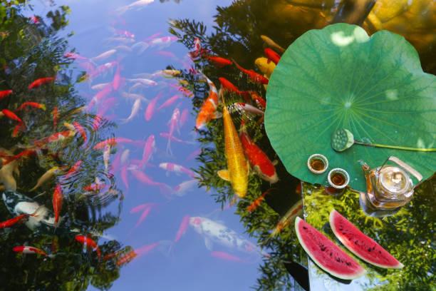 Summer pond,:スマホ壁紙(壁紙.com)