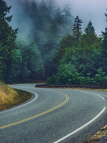 Dividing Line - Road Marking「winding road travel through the Hoh rainforest in the fog,washington」:スマホ壁紙(1)
