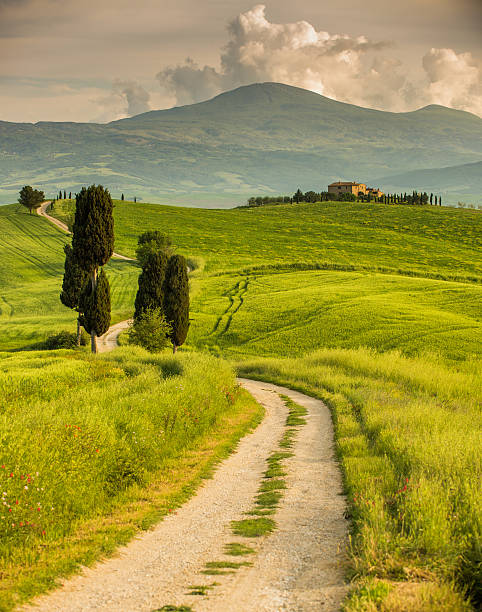 Winding road in Tuscany:スマホ壁紙(壁紙.com)