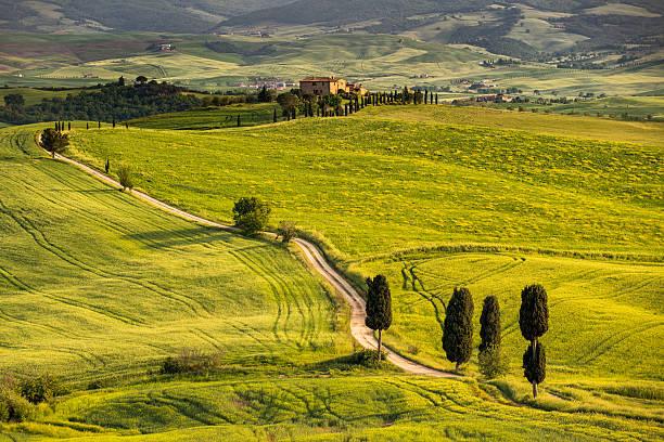 Winding road in Tuscany:スマホ壁紙(壁紙.com)