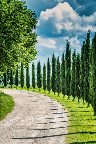 Italian Cypress「Winding road in Tuscany」:スマホ壁紙(0)