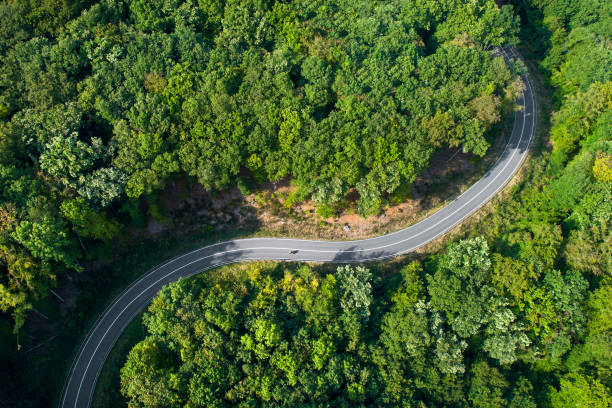 Winding road through the forest:スマホ壁紙(壁紙.com)