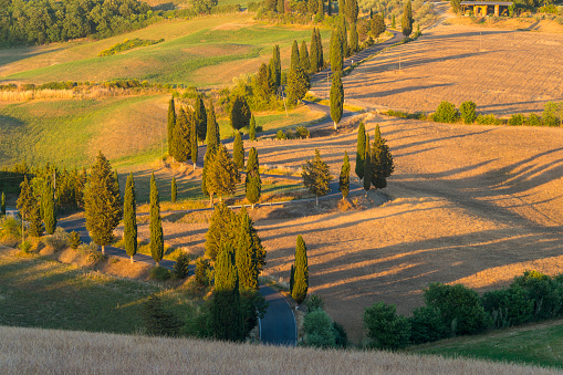 Hairpin Curve「Winding road lined with cypress trees in summer, Monticchiello, Siena Province, Val d'Orcia, Tuscany, Italy」:スマホ壁紙(14)