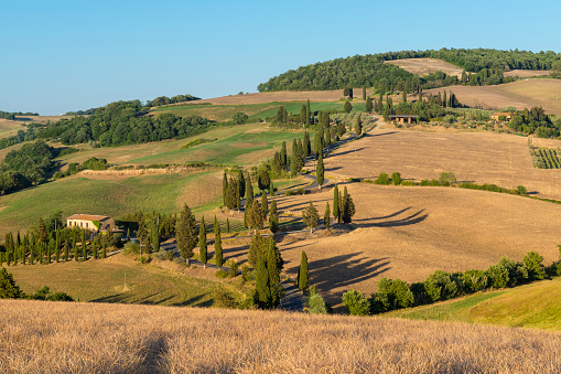 Hairpin Curve「Winding road lined with cypress trees in summer, Monticchiello, Siena Province, Val d'Orcia, Tuscany, Italy」:スマホ壁紙(18)