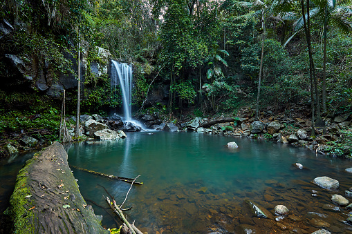 Log「Tamborine National Park,Gold Coast Hinterland,Queensland,Australia」:スマホ壁紙(9)