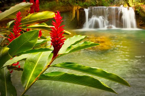 Rainforest「Jamaica YS Falls」:スマホ壁紙(16)