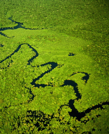 Amazon Rainforest「Brazil, Amazonas, tributary of Amazon River, aerial view」:スマホ壁紙(7)