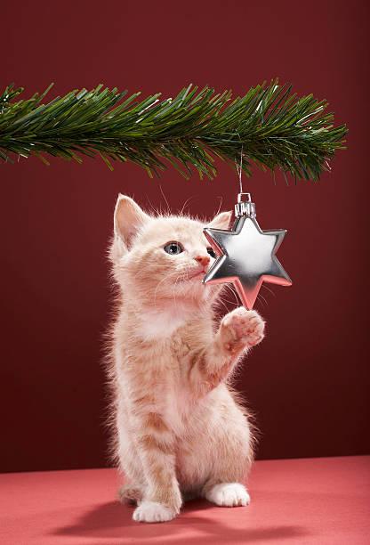 Kitten pawing Christmas decoration on tree:スマホ壁紙(壁紙.com)