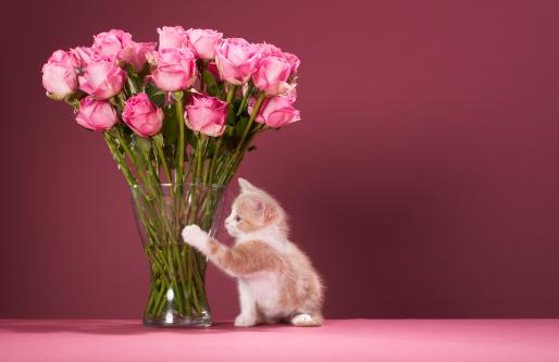 子猫「Kitten pawing vase of roses」:スマホ壁紙(7)