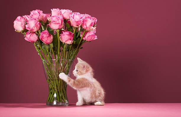Kitten pawing vase of roses:スマホ壁紙(壁紙.com)