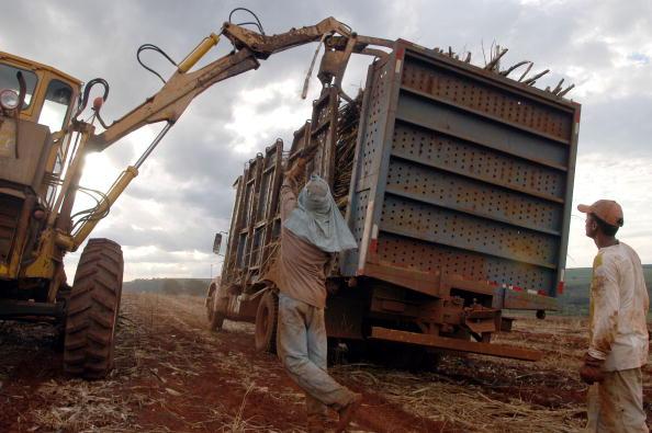 Sugar Cane「Day Labourer Harvest Sugar Canes」:写真・画像(1)[壁紙.com]