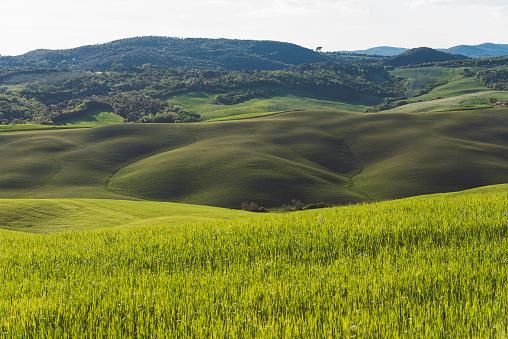 Rolling Landscape「Hills of fields in Tuscany」:スマホ壁紙(8)