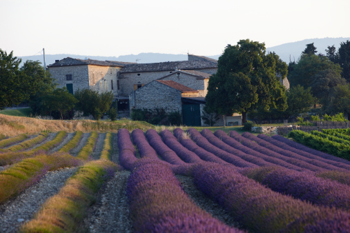 French Lavender「Farmhouse in the Provence」:スマホ壁紙(0)