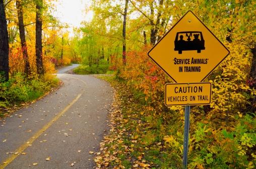 Cartoon「Paved trail in autumn, Edmonton, Alberta, Canada」:スマホ壁紙(1)