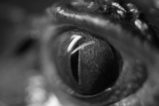Eyesight「Reptile Eye」:スマホ壁紙(2)