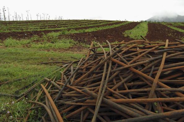 Plowed Field「Banana Prices Reach Record Levels」:写真・画像(11)[壁紙.com]