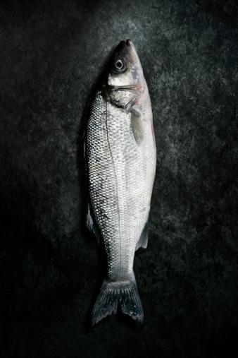Sea Bass「Dead Sea Bass Fish Lying on Grunge Background」:スマホ壁紙(9)