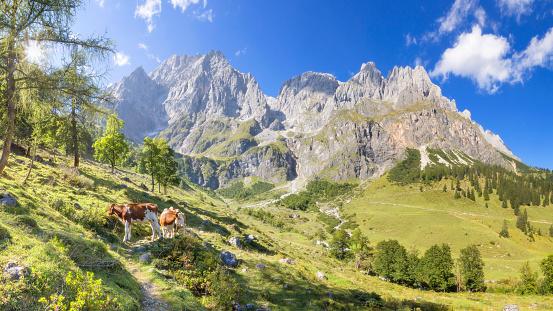 Hiking「Summer Panoramic view of Hochkönig - Mandlwände -  Alps」:スマホ壁紙(14)