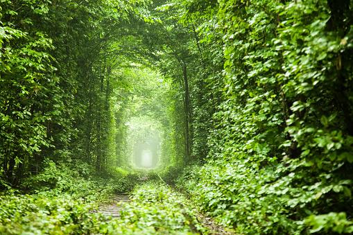 夏「自然のトンネル」:スマホ壁紙(18)