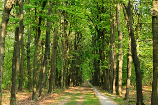 Bicycle Lane「Spring forest in the Netherlands with bicycle path」:スマホ壁紙(11)
