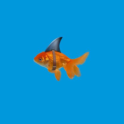 Strap「Goldfish wearing shark fin」:スマホ壁紙(17)