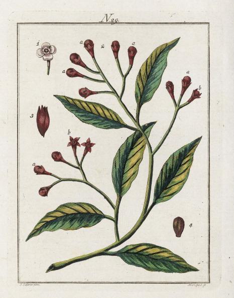 Spice「The Clove. From Die Welt In Bildern. Band 3. Baumeister. Vienna. 1790.」:写真・画像(16)[壁紙.com]