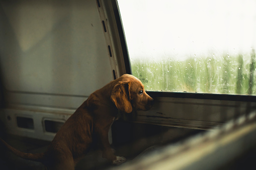 Anxiety「Sad puppy looking out the window of a van」:スマホ壁紙(19)