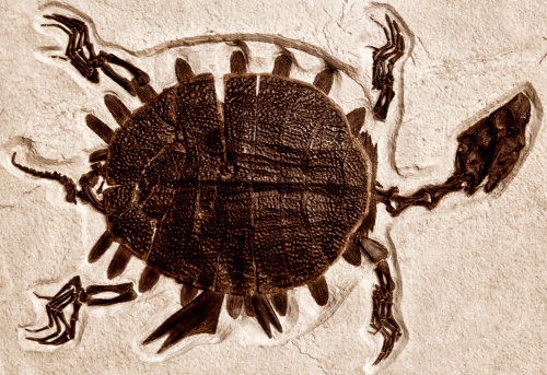 Sepia Toned「Ancient Turtle Fossil」:スマホ壁紙(14)
