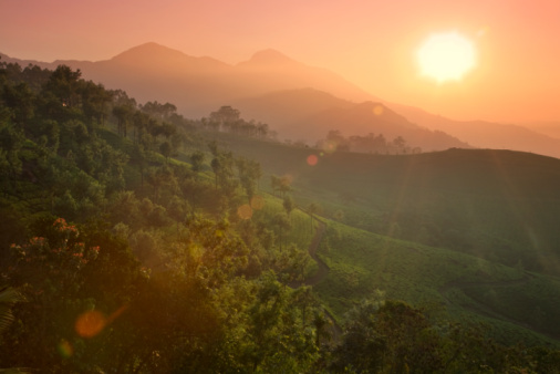 India「Munnar rolling hills and Tea Plantations, dawn」:スマホ壁紙(6)