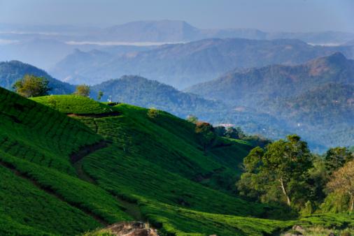 India「Munnar rolling hills and Tea Plantations, dawn」:スマホ壁紙(11)