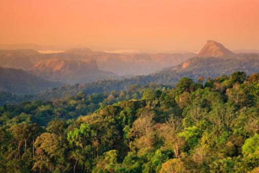 India「Munnar rolling hills and Tea Plantations, dawn」:スマホ壁紙(8)