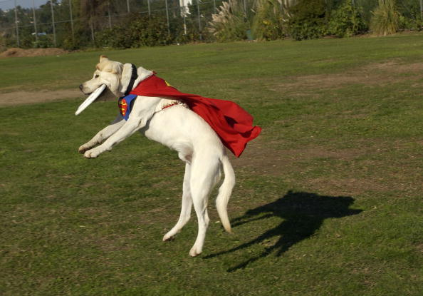 Catching「3rd Annual Bow-Wow-Ween」:写真・画像(16)[壁紙.com]