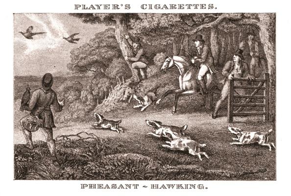 Mammal「Pheasant-Hawking」:写真・画像(14)[壁紙.com]