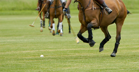 Horse「Playing polo」:スマホ壁紙(5)