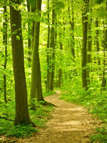 おとぎ話「森のパス」:スマホ壁紙(4)