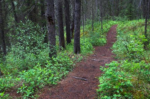 Performance Group「Forest path」:スマホ壁紙(15)
