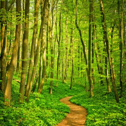 おとぎ話「森のパス」:スマホ壁紙(19)