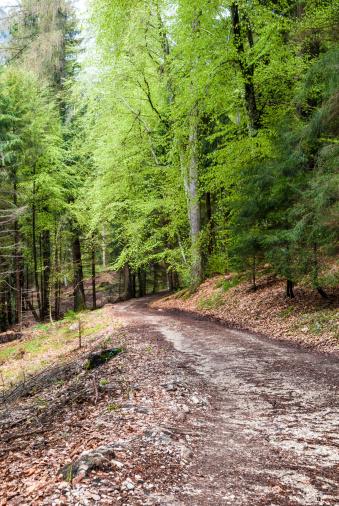Boreal Forest「Forest path」:スマホ壁紙(12)
