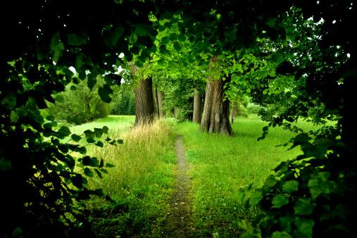おとぎ話「森のパス」:スマホ壁紙(16)